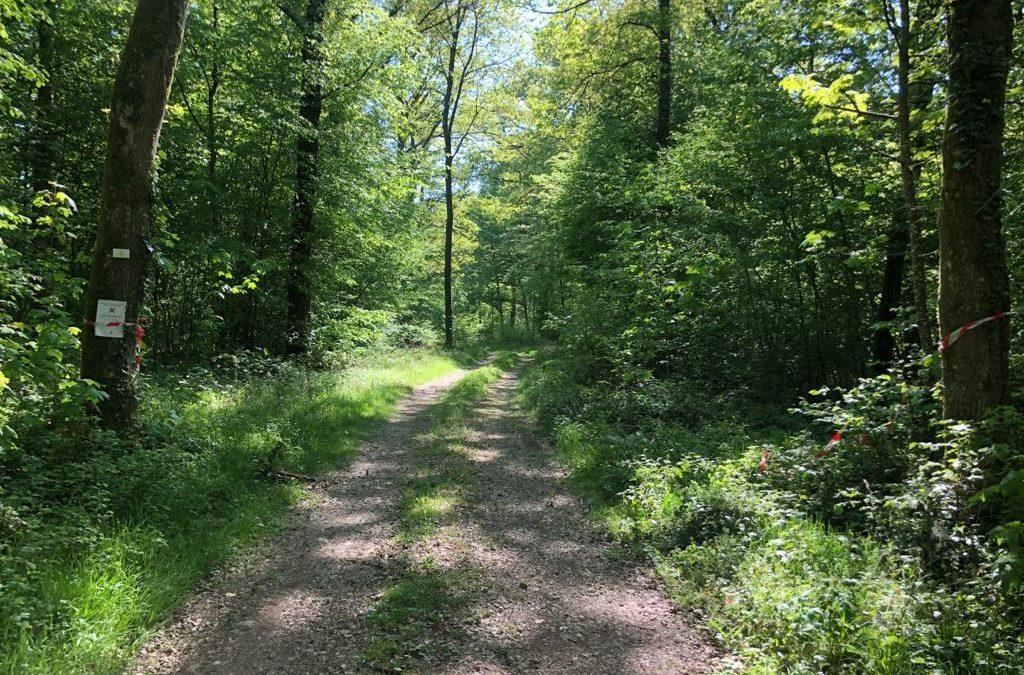 La forêt gaumaise rouverte aux Gaumais le 15 mai