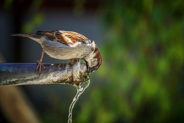 Le prix de l'eau virtonnaise: informations et solutions